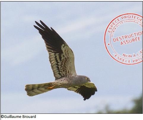 Le TOP 10 des espèces menacées par l'autoroute A45